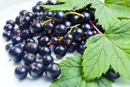 листя черной смородины
