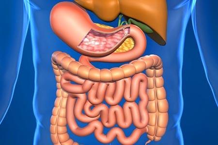 ки кишечника