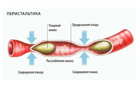 Ускоренная перистальтика кишечника причины