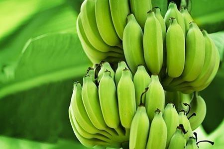 недозрелые бананы
